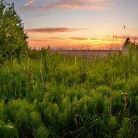 Травы не успели от росы серебряной согнуться... :: Елена Третьякова