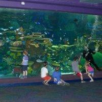 Дайвер рассказывает детям о подводном мире... :: Юрий Поляков