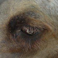 Глаз верблюда :: Вера Щукина