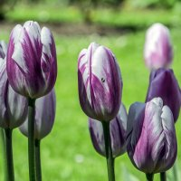 Цветы Ораниенбаума 2 :: Valerii Ivanov