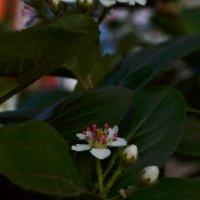 Цветок :: Кристина Семакина