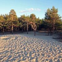 Северодвинск. Разные дни у Белого моря. За дюнами :: Владимир Шибинский