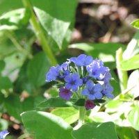 Дикий цветок :: Анастасия Романова