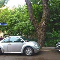 Дерево и жук. :: Василий Батурин