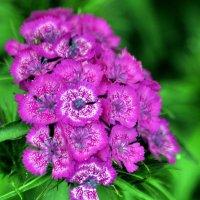Розовый букет. :: ОЛЕГ ПАНКОВ