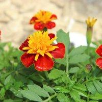 цветы :: андрей шилов