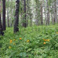 Огоньки цветут :: Наталья Золотых-Сибирская