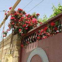 Цветущие ворота :: Gudret Aghayev