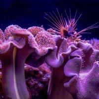 Одним глазком в подводный мир...1 :: susanna vasershtein