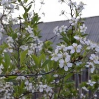 поздняя весна :: Элли Gem