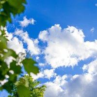 Небо :: Анна Печкурова