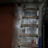 Лестница :: Людмила Синицына
