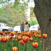 Весна пришла :: Ирина Жигулина