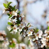 цветы :: Александр К.