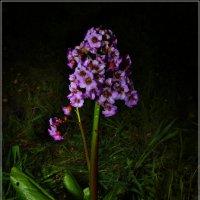 Цветок из камня :: Владимир Холодный