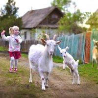 идет коза рогатая :: Наталья Могильникова