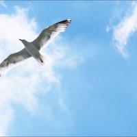Парящая в небесах :: Swetlana V
