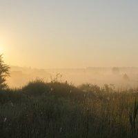 на заре я выйду в туман... :: Ксения Довгопол