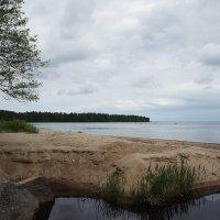 Берег Финского залива в районе деревни Старое Гарколово :: Елена Павлова (Смолова)