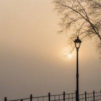 Туманное утро :: shvlad