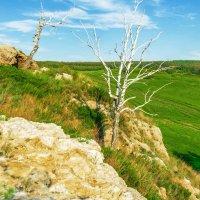Недолговечна жизнь на камнях :: Любовь Потеряхина