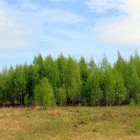 Весной :: оля san-alondra
