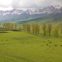 Где то в  Армении :: M Marikfoto