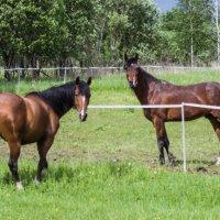 Общающиеся лошади :: Николай Ефремов