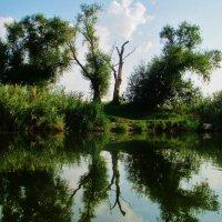 Берега родной реки... :: евгения