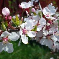 Весна пришла! :: Наталья Тимофеева