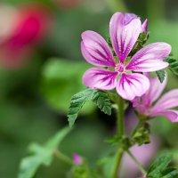 Скромность летних цветов :: Елена Васильева