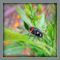 Это муха :: Ron Леви