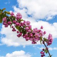 Однако весна :: Александр Творогов