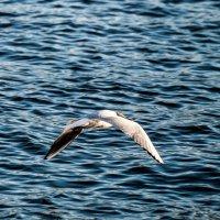 Полёт над водой :: Михаил Вандич
