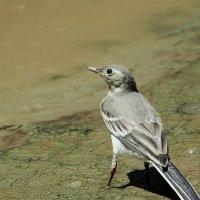 Птичка невеличка :: Swetlana V