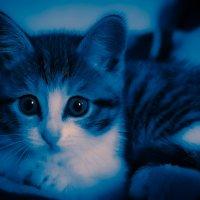 Кошечка :: Konstantin Bir
