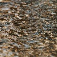 Закатные блики на воде :: Денис Масленников