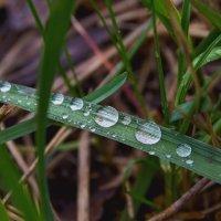 Капли после дождя :: Юрий Стародубцев