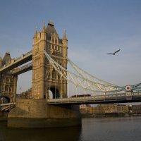 Tower Bridge :: Ольга Гурьянова