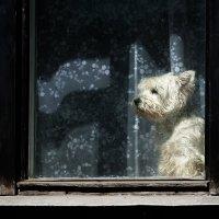 Московские окна. :: Роман Полианчик