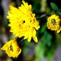 Цветы :: Арина Бибик