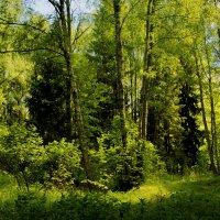 В лесу-лесочке... :: Юрий
