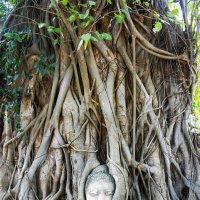 Голова статуи в корнях дерева,Айютайя,Тайланд :: Евгений Подложнюк