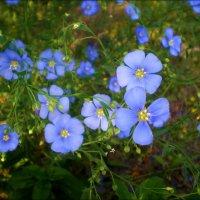 Милашки голубые :: Татьяна Пальчикова