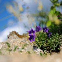 Синенький цветочек :: Андрей Куприянов