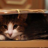 Кот в мешке :: Алексей Корнеев