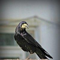 Из жизни птиц. Позирует. :: TATYANA PODYMA