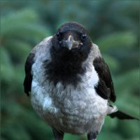 Птица умная. :: Lev Serdiukov