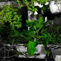 Green days :: Аня Андрейчук