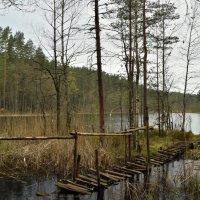 На лесном озере_1 :: Юля Елисеева